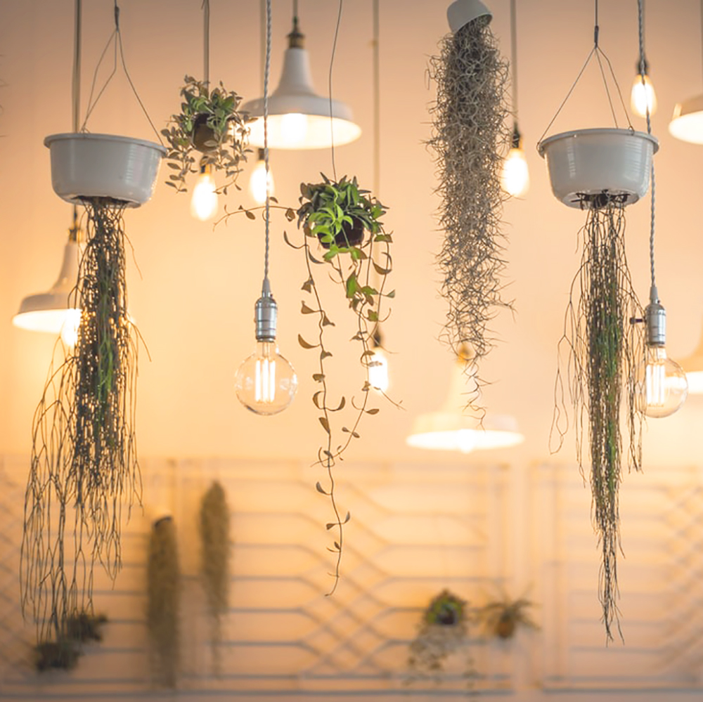 Hanging plants and light fixtures