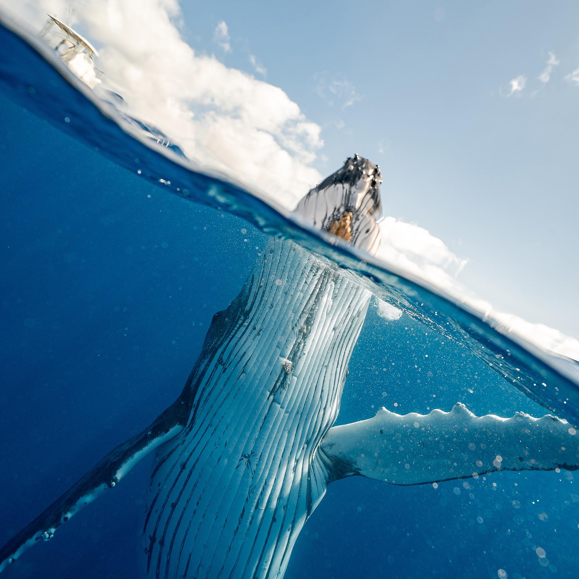Humpback whale emerging from ocean by Elianne Dipp via Pexels